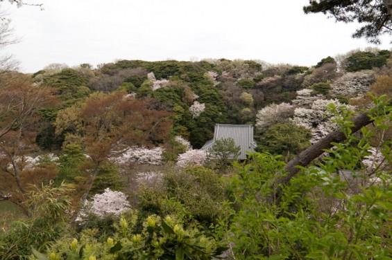 高台からの三渓園