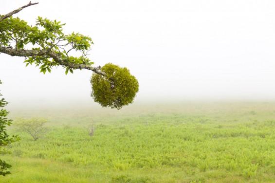 丸い宿り木