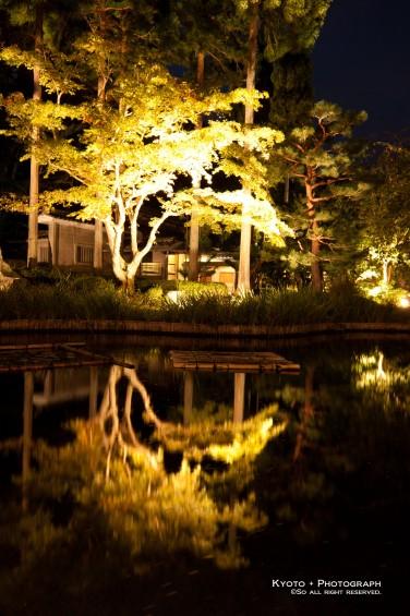庭園内のライトアップ