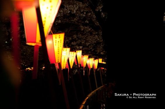 目黒川の夜桜 その2