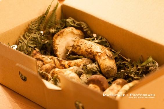 箱に入った松茸