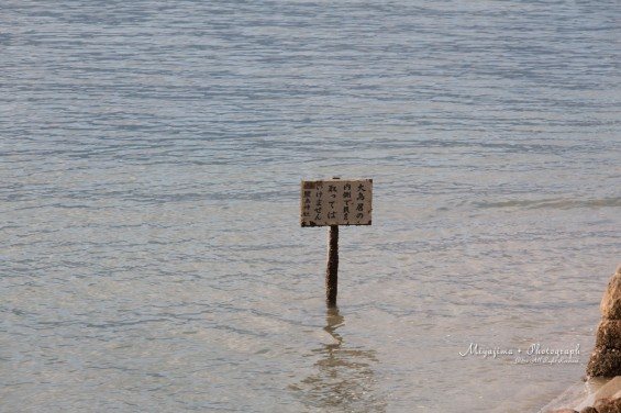看板の上まで水があったのに・・・