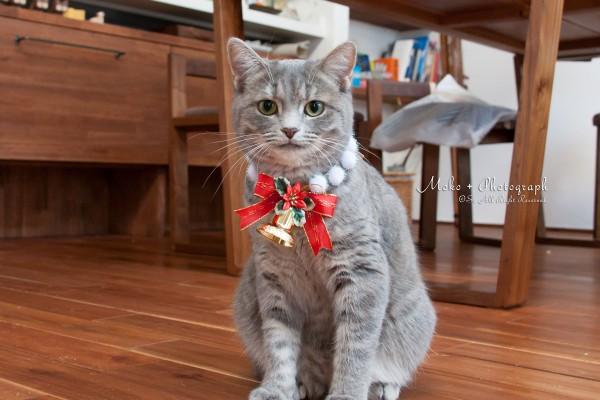 クリスマス用首輪をつけてみた