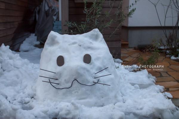 2014大雪 猫だるま