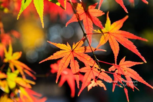九品仏浄真寺の紅葉
